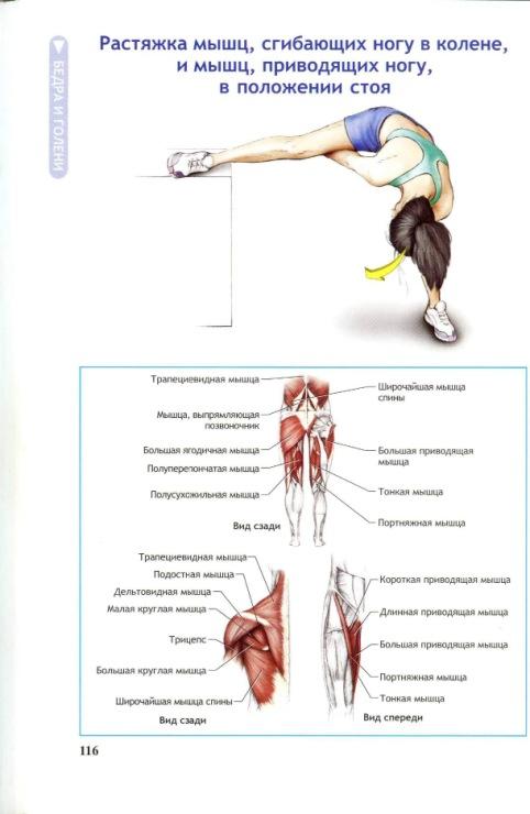Растяжка мышц домашних условиях