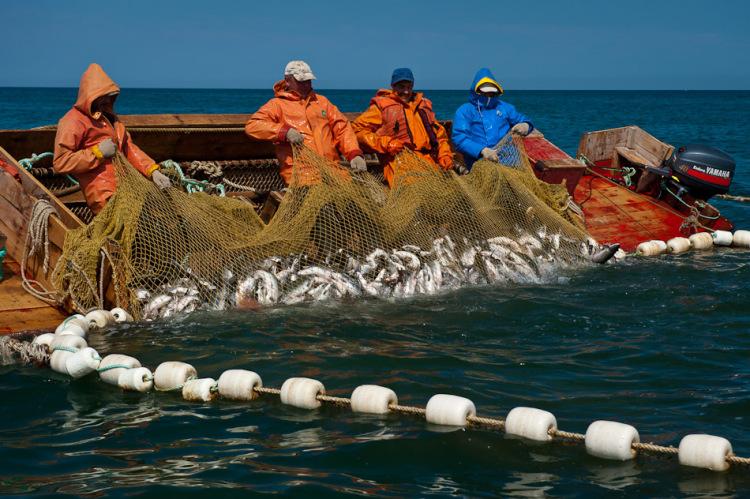 организация тральщик разнорабочий на вылов рыбы семи половиной